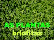 As plantas: briofitos