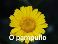 O pampullo