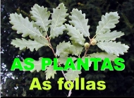 As plantas: as follas