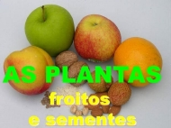 As plantas: os froitos