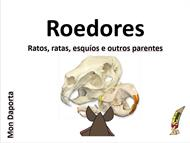 Os roedores